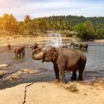 Wissenschaft auf Reisen XIX (Sri Lanka 2018)